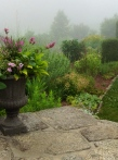 Morning mist in the garden-pixieperennials@gmail.com