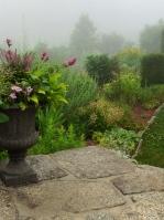 Morning mist in the garden-pixieperennials@gmail.com