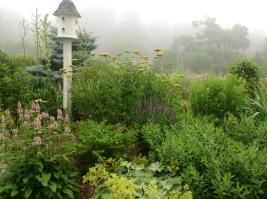 Backyard garden -pixieperennials@gmail.com