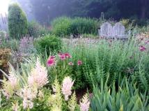 Back garden - pixieperennials@gmail.com