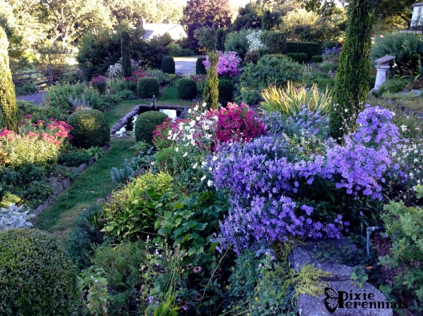 Terraces at pixieperennials@gmail.com