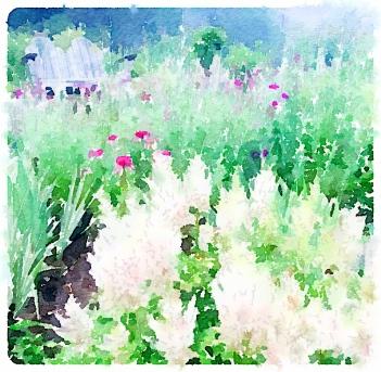 Back garden - -pixieperennials.com
