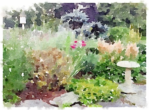 Back garden -watercolor -pixieperennials.com