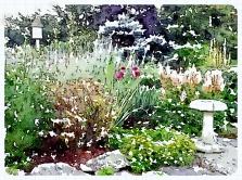 Back garden -pixieperennials.com