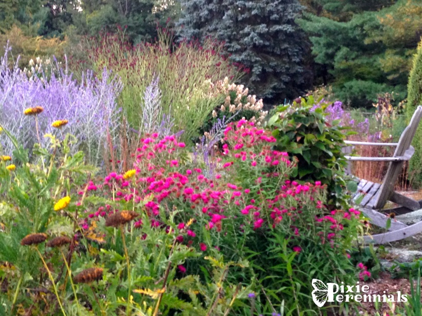 Backyard garden - September 2014