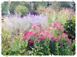 Back garden 2014 - pixieperennials.com#Waterlogue