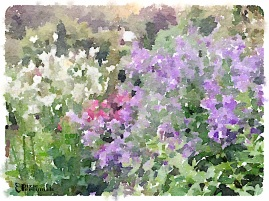 Backyard garden 2014 - pixieperennials.com#Waterlogue
