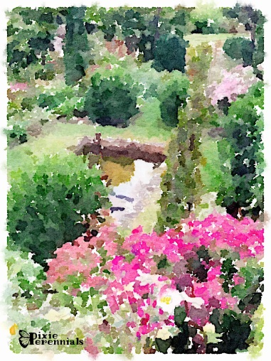 Lower terrace - September 2014 (frog pond) - pixieperennials.com#Waterlogue