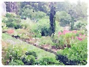 View of terraced garden from courtyard garden- September 2014 - pixieperennials.com#Waterlogue