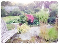 Backyard garden - September 2014 - pixieperennials.com#Waterlogue