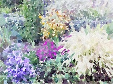 Terraced garden - September 2014 - pixieperennials.com#Waterlogue
