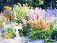 Toadstool in the back garden - September 2014 -pixieperennials.com#Waterlogue