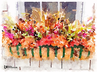 Autumnal window box decoration - pixieperennials.com