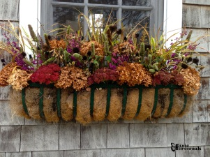 Garden shed window box - 2014