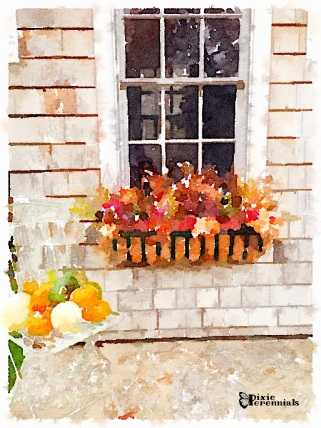 Window box and chair with pumpkins and gourds - pixieperennials.com