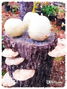 Ghost pumpkin on Norway spruce stump with shelf fungi - pixieperennials.com