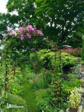 Terrace garden - pixieperennials.com